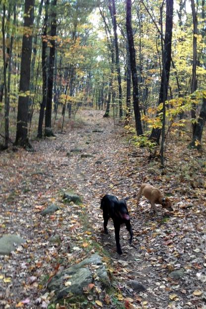 Northeast in Fall